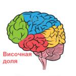 Височная доля мозга при эпилепсии