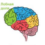 Лобная доля при эпилепсии