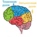 Теменная и затылочная доля при эпилепсии
