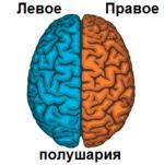 Полушария головного мозга