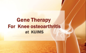 Gene therapy for knee osteoarthritis at KUIMS